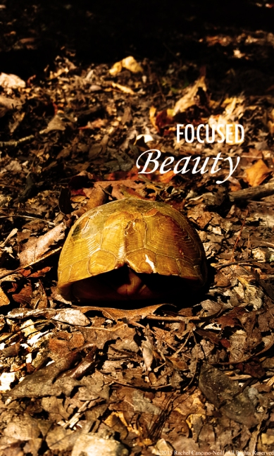 """Turtle"" by Rachel Cancino-Neill taken at Roaring River State Park"