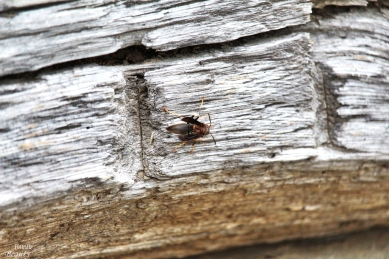 """""""Wasp on the Wall"""" by Rachel Cancino-Neill"""